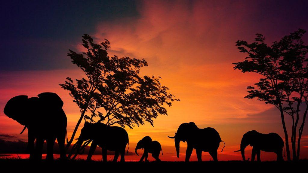 Safari africa prezzi