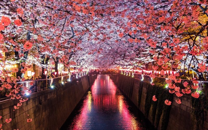 viaggio organizzato in Giappone